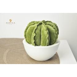Cactus in velluto