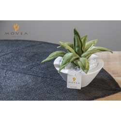 Agave artificiale in velluto